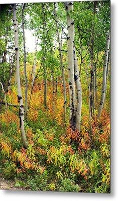 Fall In The Tetons Metal Print by Marty Koch