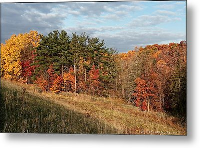 Fall In The Valley Metal Print by Daniel Behm