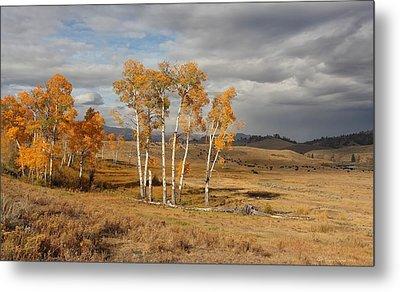 Fall In Yellowstone Metal Print by Daniel Behm