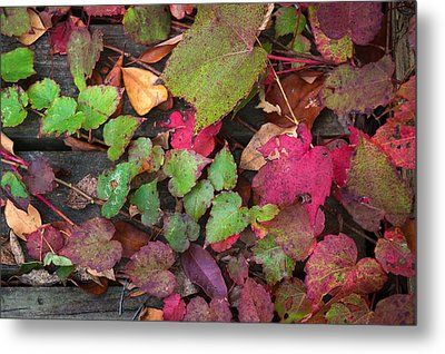 Metal Print featuring the photograph Fall Ivy by Wayne Meyer