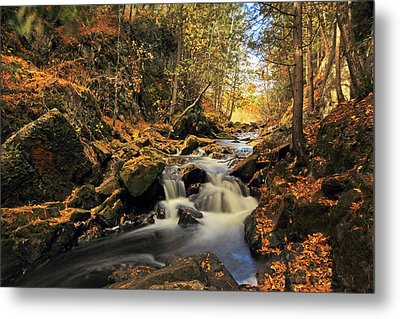 Metal Print featuring the photograph Fall by Kelly Marquardt