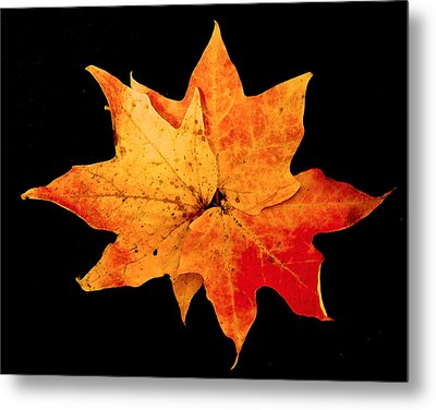 Metal Print featuring the photograph Fall Leaf Trio by Dee Dee  Whittle