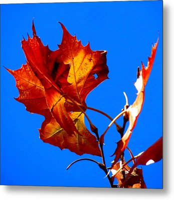 Metal Print featuring the photograph Fall Leave by David  Norman