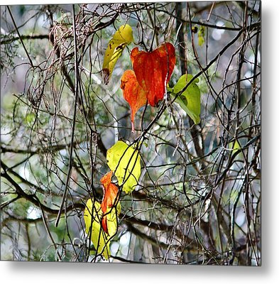 Fall Leaves Metal Print by Cynthia Guinn