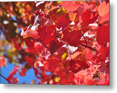 Metal Print featuring the photograph Fall Leaves In Oregon by Mindy Bench