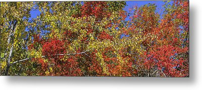 Fall Leaves In So Cal Metal Print