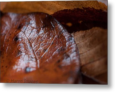 Metal Print featuring the photograph Fall Leaves by Haren Images- Kriss Haren