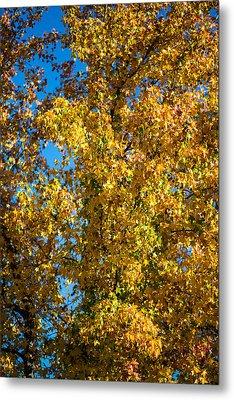 Fall Leaves Metal Print by Mike Lee