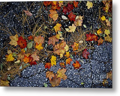 Fall Leaves On Pavement Metal Print by Elena Elisseeva