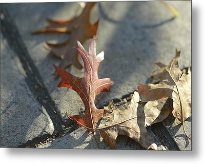 Autumn Oak Leaves On Sidewalk Metal Print by Valerie Collins