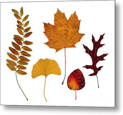 Fall Leaves Metal Print by Tony Cordoza