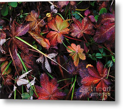 Metal Print featuring the photograph Fall Mix by Janice Westerberg
