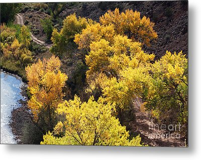Metal Print featuring the photograph Fall On The Chama River by Roselynne Broussard