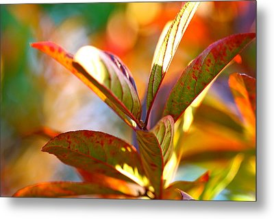 Fall Party Metal Print by Tracy Male