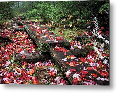 Fall Path Metal Print by Dave Cleaveland