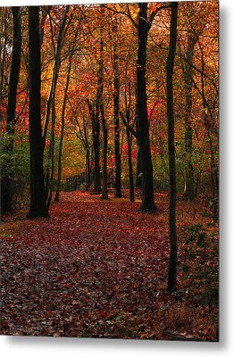 Fall Path Metal Print by Raymond Salani III