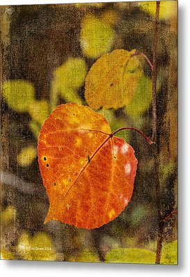 Fall Quaking Aspen Metal Print