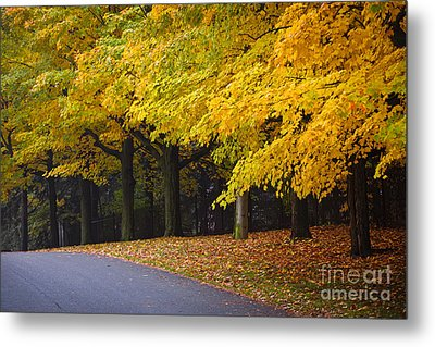 Fall Road And Trees Metal Print by Elena Elisseeva