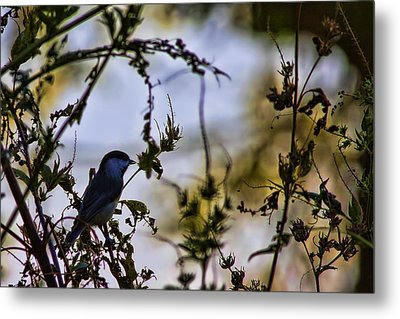 Metal Print featuring the photograph Fall Silhouette by Gary Holmes