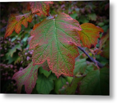 Fall Sparkle Metal Print