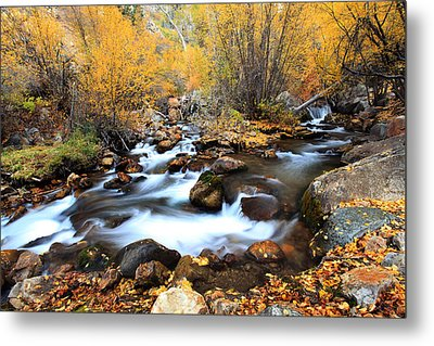 Fall Stream Metal Print by Darryl Wilkinson