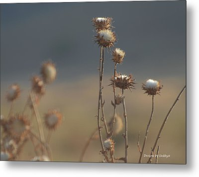 Metal Print featuring the photograph Fall Thistles At Dusk by Debby Pueschel