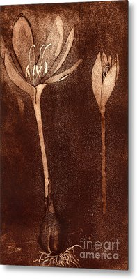 Metal Print featuring the painting Fall Time - Autumn Crocus Meadow Safran by Urft Valley Art