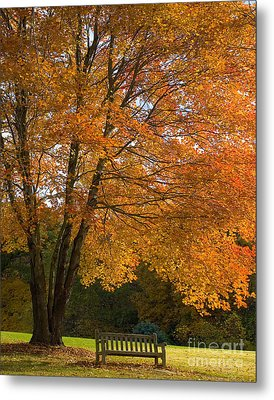 Fall Tree And Bench Metal Print