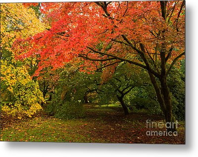 Fall Trees Metal Print by Amanda Elwell