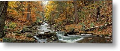 Fall Trees Kitchen Creek Pa Metal Print