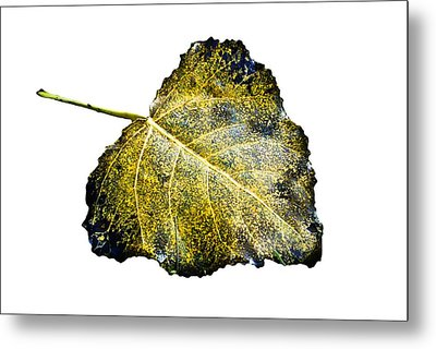 Fallen Leaf 1t Metal Print by Greg Jackson