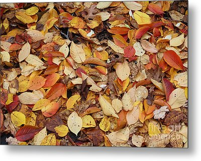 Metal Print featuring the photograph Fallen Leaves by Dora Sofia Caputo Photographic Art and Design