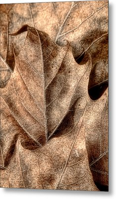 Fallen Leaves I Metal Print by Tom Mc Nemar