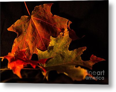 Metal Print featuring the photograph Fallen Leaves by Judy Wolinsky