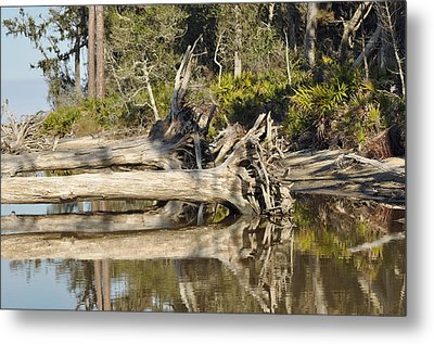 Fallen Trees Reflected In A Beach Tidal Pool Metal Print by Bruce Gourley