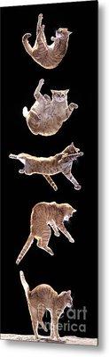 Falling Cat Metal Print