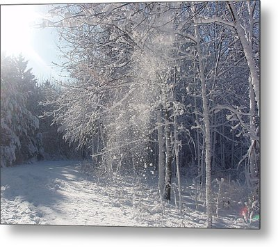 Metal Print featuring the photograph Falling Snow by Teresa Schomig