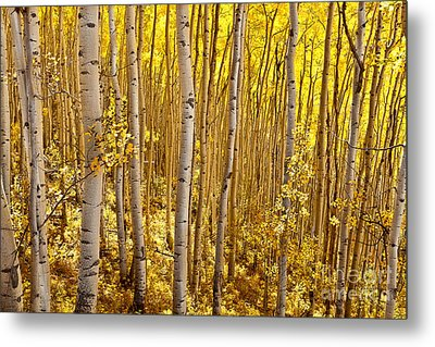 Metal Print featuring the photograph Fall's Golden Light by Steven Reed