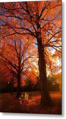 Fall's Splendor Metal Print
