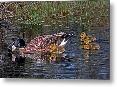 Family Affair Metal Print by Skip Willits