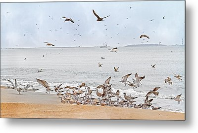 Family Flock  Metal Print
