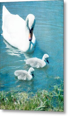 Family Of Swans At The Market Common Metal Print