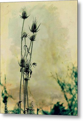 Family Of Teasels Metal Print