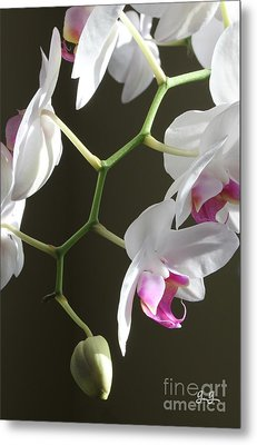 Family Twig Metal Print by Geri Glavis