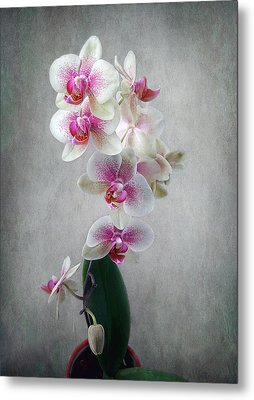 Metal Print featuring the photograph Fancy Orchids by Louise Kumpf