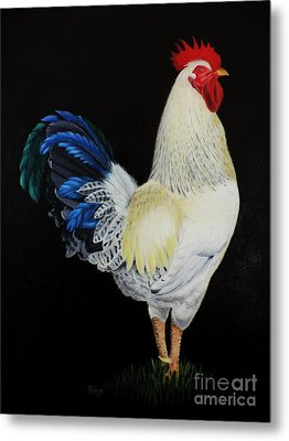 Fancy Tail  Rooster Metal Print