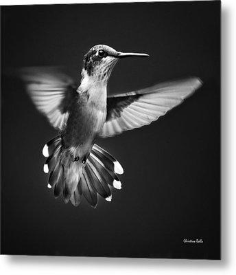 Fantail Hummingbird Metal Print