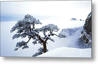 Fare-well Pine Tree Metal Print by King Wu