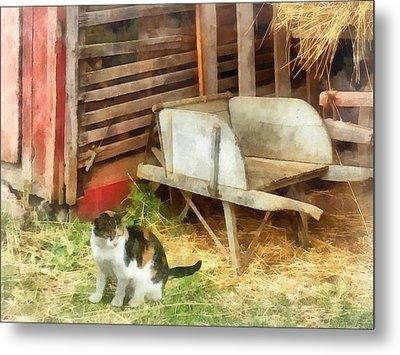 Farm Cat Metal Print by Susan Savad