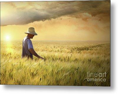 Farmer Checking His Crop Of Wheat  Metal Print
